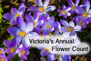 Victoria's annual flower count